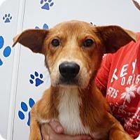 Adopt A Pet :: Tyler - Oviedo, FL