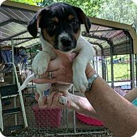 Adopt A Pet :: Olive - Hohenwald, TN