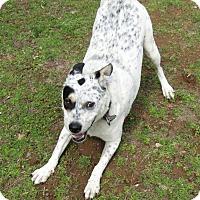 Adopt A Pet :: Sunny - Harrisonburg, VA
