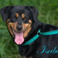 Adopt A Pet :: Isabelle - Middleburg, FL