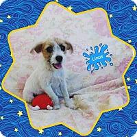 Adopt A Pet :: Linus - San Bernardino, CA