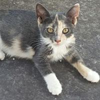 Adopt A Pet :: Betsy - Mims, FL