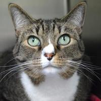 Adopt A Pet :: Baby Stork Amelie - Annapolis, MD