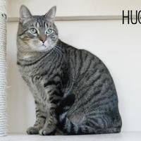Adopt A Pet :: Hugo - Waupun, WI