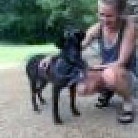 Adopt A Pet :: Shady LOYAL - Tunica, MS