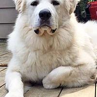 Adopt A Pet :: Logan in NY - new! - Beacon, NY