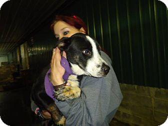 Basset Hound/Shepherd (Unknown Type) Mix Dog for adoption in Albert Lea, Minnesota - Skit