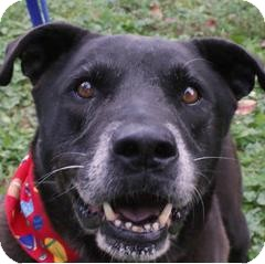 Labrador Retriever Mix Dog for adoption in New Freedom, Pennsylvania - Moselle