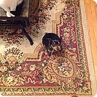 Adopt A Pet :: Charly - Topeka, KS