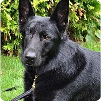 Adopt A Pet :: Raven - BC Wide, BC