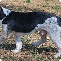 Adopt A Pet :: Fritz - Providence, RI