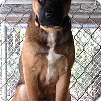 Adopt A Pet :: Scrappy - Lancaster, VA