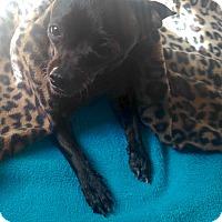 Adopt A Pet :: Delores - Los Angeles, CA