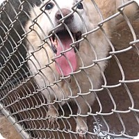 Adopt A Pet :: Duncan - RESCUED! - Zanesville, OH