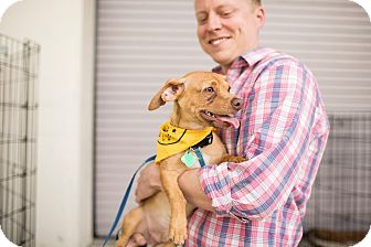 Terrier (Unknown Type, Medium)/Chihuahua Mix Puppy for adoption in San Francisco, California - Curry