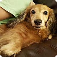 Adopt A Pet :: Miss Kitty - Decatur, GA
