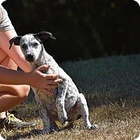 Adopt A Pet :: Tadpole - South Dennis, MA
