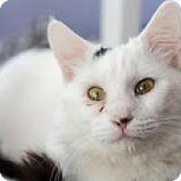 Adopt A Pet :: Leon - East Norriton, PA