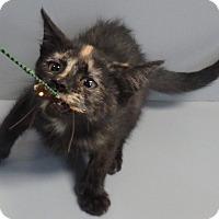 Adopt A Pet :: June Bug - Seguin, TX