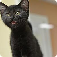 Adopt A Pet :: Ryder170952 - Atlanta, GA