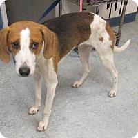 Adopt A Pet :: Abby - Warrenton, NC