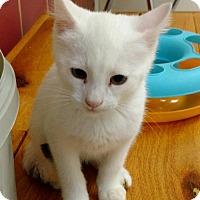 Adopt A Pet :: Ghost - New Bern, NC
