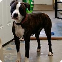 Adopt A Pet :: Skye - Franklin, NH