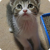 Adopt A Pet :: Woody - Sterling Heights, MI