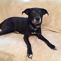 Adopt A Pet :: Rae - Saint Clair, MO