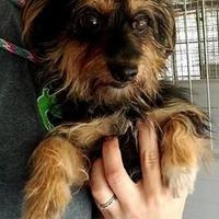 Adopt A Pet :: Snickers - Gainesville, FL