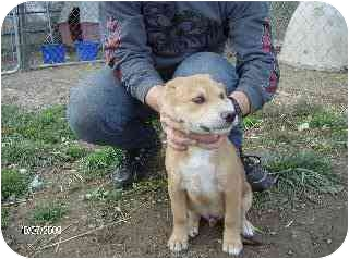 Collie Mix Dog for adoption in Edon, Ohio - Pistol