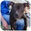 Photo 2 - American Staffordshire Terrier Mix Dog for adoption in New York, New York - Joey