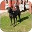 Photo 3 - Labrador Retriever Mix Dog for adoption in Austin, Minnesota - Lindsey