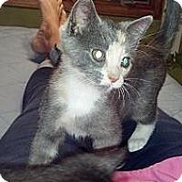 Adopt A Pet :: Primrose (bottle fed) - Sterling Hgts, MI