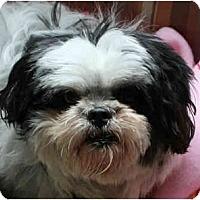 Adopt A Pet :: Prince Charming - Concord, CA