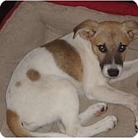 Adopt A Pet :: Zoe - Washington, NC