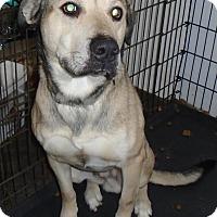 Adopt A Pet :: KANUK - Cornwall, ON