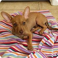 Adopt A Pet :: Ryne - Phoenix, AZ
