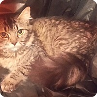 Adopt A Pet :: Bindy - Harrisburg, NC