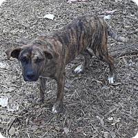 Adopt A Pet :: Neville meet me 1/20 - Manchester, CT