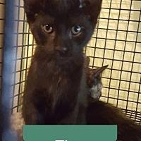 Adopt A Pet :: Ting - Marianna, FL