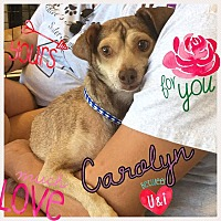 Adopt A Pet :: Carolyn - Brownsville, TX