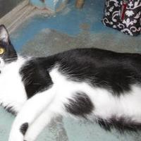 Adopt A Pet :: Stray-Redding St-Avail 7/25 - Inverness, FL
