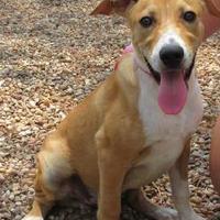Adopt A Pet :: Houston - Wichita Falls, TX