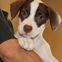 Adopt A Pet :: Bagel - Apache Junction, AZ