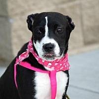 Adopt A Pet :: Renegade - Munford, TN