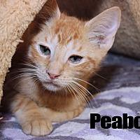 Adopt A Pet :: Peabody - Media, PA
