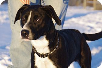 Hound (Unknown Type) Mix Dog for adoption in Elyria, Ohio - Axel