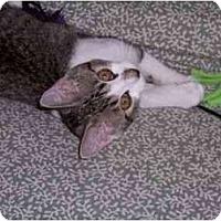 Adopt A Pet :: Marcia - Spencer, NY