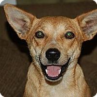Adopt A Pet :: Maddie- in CT - West Hartford, CT
